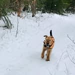 Dakota tags along for some fat bike fun on the snowy trails