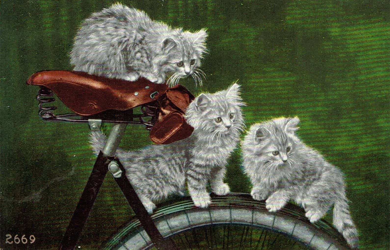 HOW DO I FIND THE RIGHT BIKE SEAT FOR ME? – Three cats on a bicycle answer the question by helping you to find your purrfect saddle.