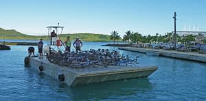 Tahiti tandem tour - Barge bringing all the bikes to the dock